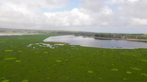 Lake with mangroves on the island of Mindanao, Philippines ライブ動画
