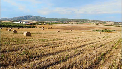 Wheat bales on agricultural fields with harvested wheat in summer time. Aerial view Live Action