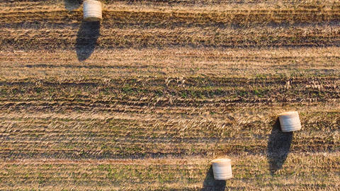 Top bird view of agricultural filed with bales of harvested wheat. Aerial view Live Action