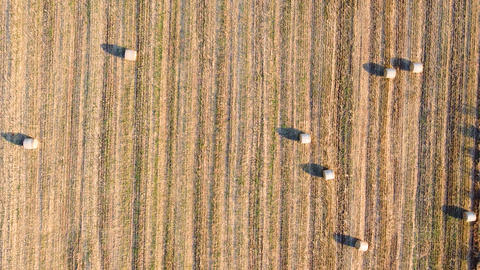 Golden field wheat with bales of hay. Top aerial view of agricultural field with bales of harvested Live Action