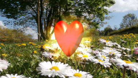 Love heart on meadow Stock Video Footage