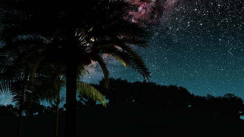 Palms and Milky Way stars at night. Elements of this image furnished by NASA Footage