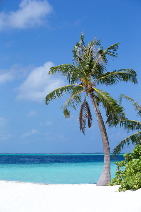 Beach with a white sand and a palm Fotografía
