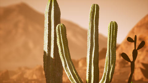 Arizona desert sunset with giant saguaro cactus GIF