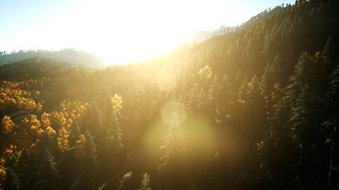 Aerial Drone View Flight over pine tree forest in Mountain at sunset GIF