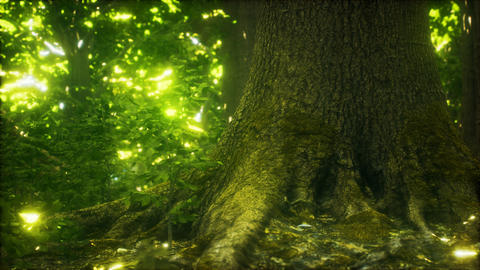 The primeval forest with mossed ground GIF
