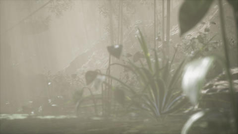 Sun shining through trees and fog in a tropical river GIF