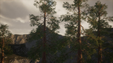 Misty forest on the mountain slope GIF