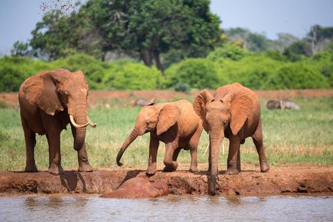 Family of elephants drinking water from the waterhole Fotografía