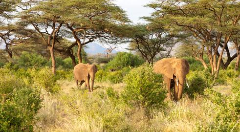 Elephants walk through the jungle amidst a lot of bushes Fotografía