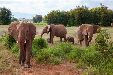 A elephant family in the bush of the samburu national park Fotografía