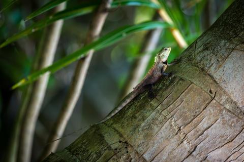 Small lizard on a palm tree Fotografía