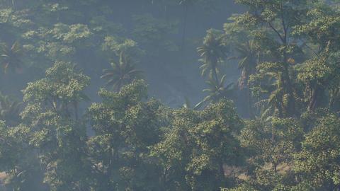 Fog covered jungle rainforest landscape GIF