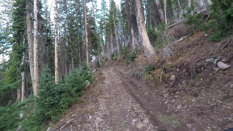 Fallen timber forest recreation ride 4x4 POV HD 944 Footage