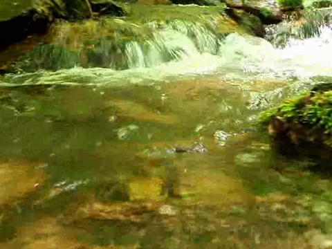Small creek in forest Footage