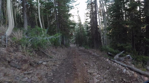 Mountain trail pine aspen forest Recreation POV HD 938 Footage