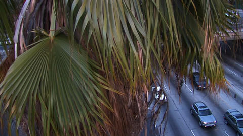A tall palm tree looms over a busy freeway Stock Video Footage