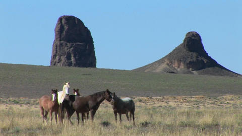 Wild horses graze in a field near large mountain... Stock Video Footage