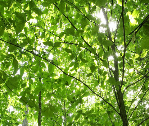 Lush, green leaves wave in the breeze Stock Video Footage