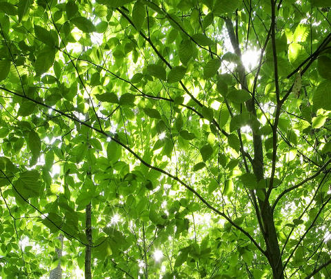 Lush, green leaves wave in the breeze Live Action