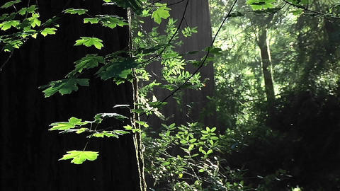 Insects fly on a calm afternoon in the forest Footage