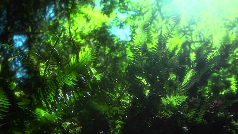 A breeze moves plants across the forest floor Stock Video Footage