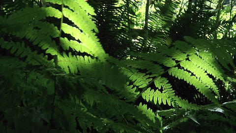 A breeze moves plants across the forest floor Footage
