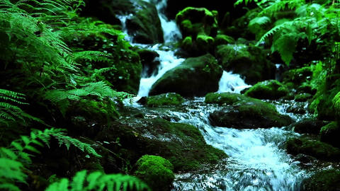 A stream flows through a forest Stock Video Footage