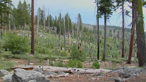 A forest is barren after a devastating forest fire in... Stock Video Footage