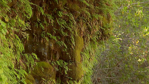 Moss grows in a rainforest near a waterfall Footage