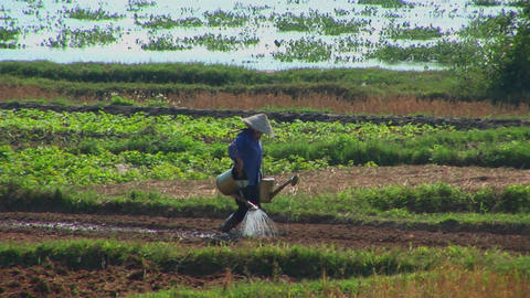 A Vietnamese farmer waters fields using traditional methods Footage