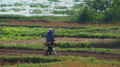 A Vietnamese farmer waters fields using traditional methods Stock Video Footage