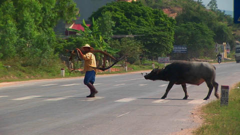 A man leads his water buffalo past a crowded highway in... Stock Video Footage