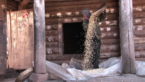A peasant woman threshes and pours rice on a farm in China Stock Video Footage