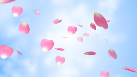 The petal which is scattered Stock Video Footage