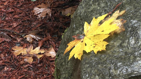 A leaf sits on a rock in a forest, suggesting fall Footage