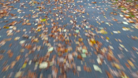 Ride by asphalt road in autumn park. Road covered first colorful leaves. Following path close to Live Action