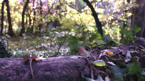 Forest Trunk left Slide Footage
