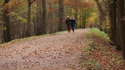 walking in the park in the autumn Footage