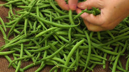Green french beans,preparation woman female hands. Healthy food Live Action