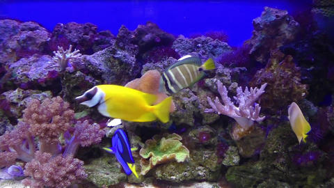 Tropical fishes at aquarium, Czech Republic Live Action