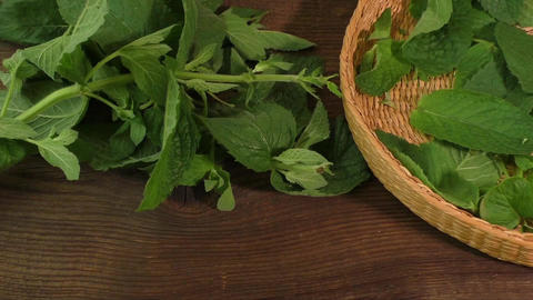 Plucking leaves mint fresh medical herbs Footage