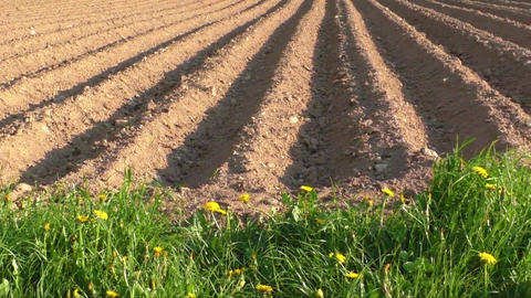 Agricultural field that was plowed furrows for planting potatoes Footage