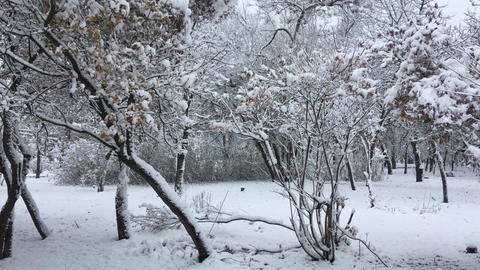 Trees in the park covered with snow Archivo
