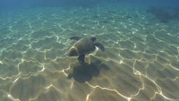 Underwater green sea turtle (Chelonia mydas) over sandy ground, sun reflections Footage
