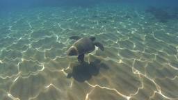 Underwater green sea turtle (Chelonia mydas) over sandy ground, sun reflections Footage