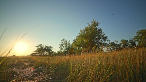 Sunset in the Field Under Blue Sky Grass Tree Way Footage