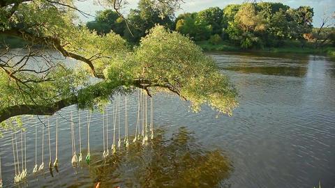 Bottles With Poems Inside River Water Landart Festival Footage