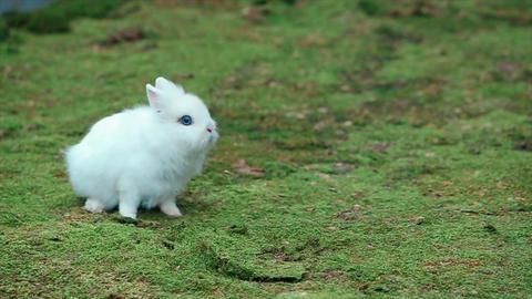 White Little Rabbit on Green Moss Footage