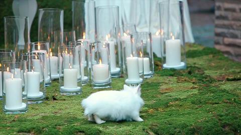 White Rabbit on Green Moss wedding decoration Footage